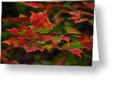 Red And Green Autumn Leaves Greeting Card