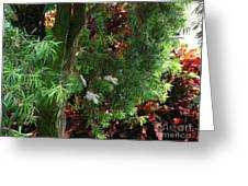 Red And Green Foliage Greeting Card