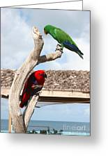 Red And Green Parrots Greeting Card