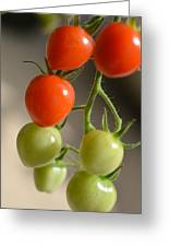 Red And Green Tomatoes Greeting Card