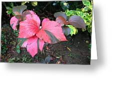 Red And Grey Greeting Card