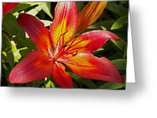 Red And Orange Lilly In The Garden Greeting Card