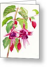 Red And Purple Fuchsias Greeting Card by Sharon Freeman