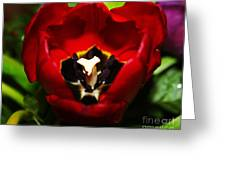 Red And Tulip Greeting Card by Rebecca Christine Cardenas