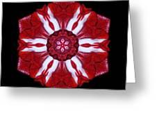 Red And White Amaryllis Iv Flower Mandala Greeting Card