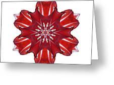 Red And White Amaryllis Vii Flower Mandala White Greeting Card