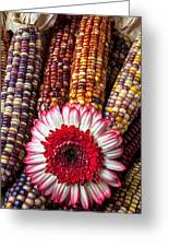 Red And White Mum With Indian Corn Greeting Card by Garry Gay