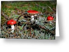 Red And White Mushrooms Greeting Card