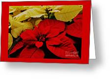 Red And White Poinsettias Greeting Card