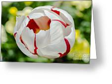 Red And White Stripes Greeting Card