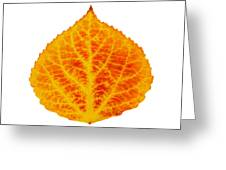 Red And Yellow Aspen Leaf 6 Greeting Card