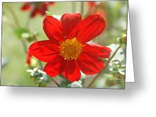 Red And Yellow Beauty Greeting Card