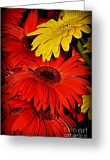 Red And Yellow Glory - The Flowers Of Summer - Gerbera Daisies Greeting Card