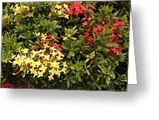 Red And Yellow In St Lucia Greeting Card