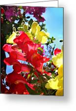 Red And Yellow Snapdragons I Greeting Card by Aya Murrells