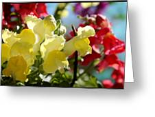 Red And Yellow Snapdragons II Greeting Card by Aya Murrells