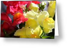 Red And Yellow Snapdragons IIi Greeting Card by Aya Murrells