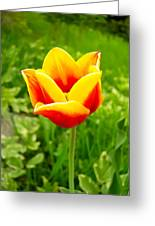 Red And Yellow Tulip Greeting Card