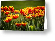 Red And Yellow Tulips II Greeting Card