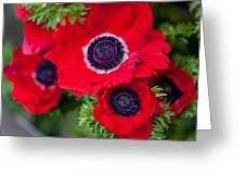 Red Anemone. Flowers Of Holland Greeting Card