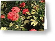 Red Antigua Balls Greeting Card