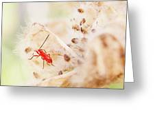 Red Aphid Seed Pod Greeting Card