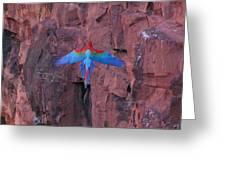 Red Arara Greeting Card