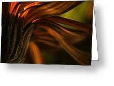 Red Autumn Blossom Detail Greeting Card