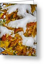 Red Autumn Maple Leaves With Fresh Fallen Snow Greeting Card