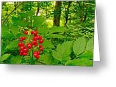 Red Baneberry Along Rivier Du Nord Trail In The Laurentians-qc Greeting Card