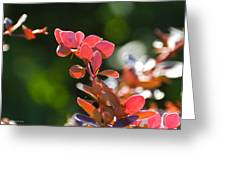 Red Barberry Greeting Card