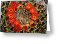 Red Barell Cactus Flowers Greeting Card