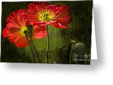 Red Beauties In The Field Greeting Card