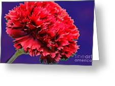 Red Beauty Carnation Greeting Card