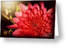 Red Beauty Welcomes The Sun - Flowers Of Summer Greeting Card