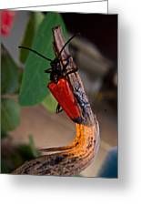 Red Beetle Rising Greeting Card