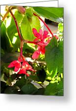Red Begonia Peaking Through The Leaves Greeting Card
