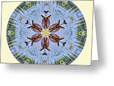 Red Bellied Turtle Mandala Greeting Card