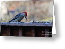 Red Bellied Woodpecker 2 Greeting Card