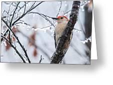 Red Bellied Woodpecker In Winter Greeting Card