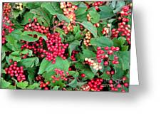 Red Berries And Green Leaves Greeting Card
