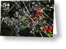 Red Berries And Violet Flowers Greeting Card