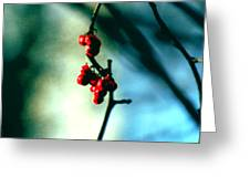 Red Berries On Canvas Greeting Card