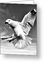 Red Billed Seagull In Black And White Greeting Card