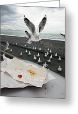 Red-billed Seagulls Greeting Card