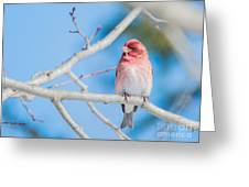 Red Bird Blue Sky Warm Sun Greeting Card