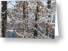 Red Bird On Snow Covered Limb Greeting Card