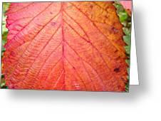 Red Blackberry Leaf Greeting Card