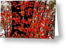 Red Blaze Burst Greeting Card