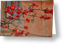 Red Blossoms In The Pink City Greeting Card